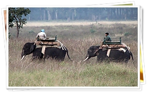Elephant Safari at Corbet National Park