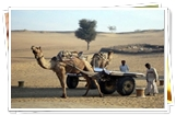 Camel Cart Safari at Khimsar