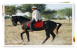 Horse Safari in Rajasthan